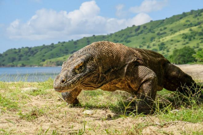 Loài rồng tiền sử cách đây hàng triệu năm còn tồn tại đến nay!