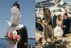 Tuyển tập ảnh cưới có 1-0-2 tạo nên bởi những kẻ 'phá bĩnh'