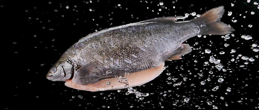Loại cá DHA gấp 4 lần cá hồi và 3 lần cá ngừ, ngon nhưng khó mua-1