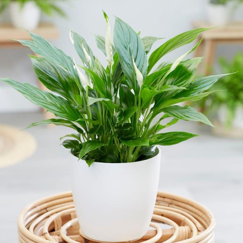 6 loại cây trồng trong bếp khử mùi cực sạch, hút tài lộc vào nhà-2