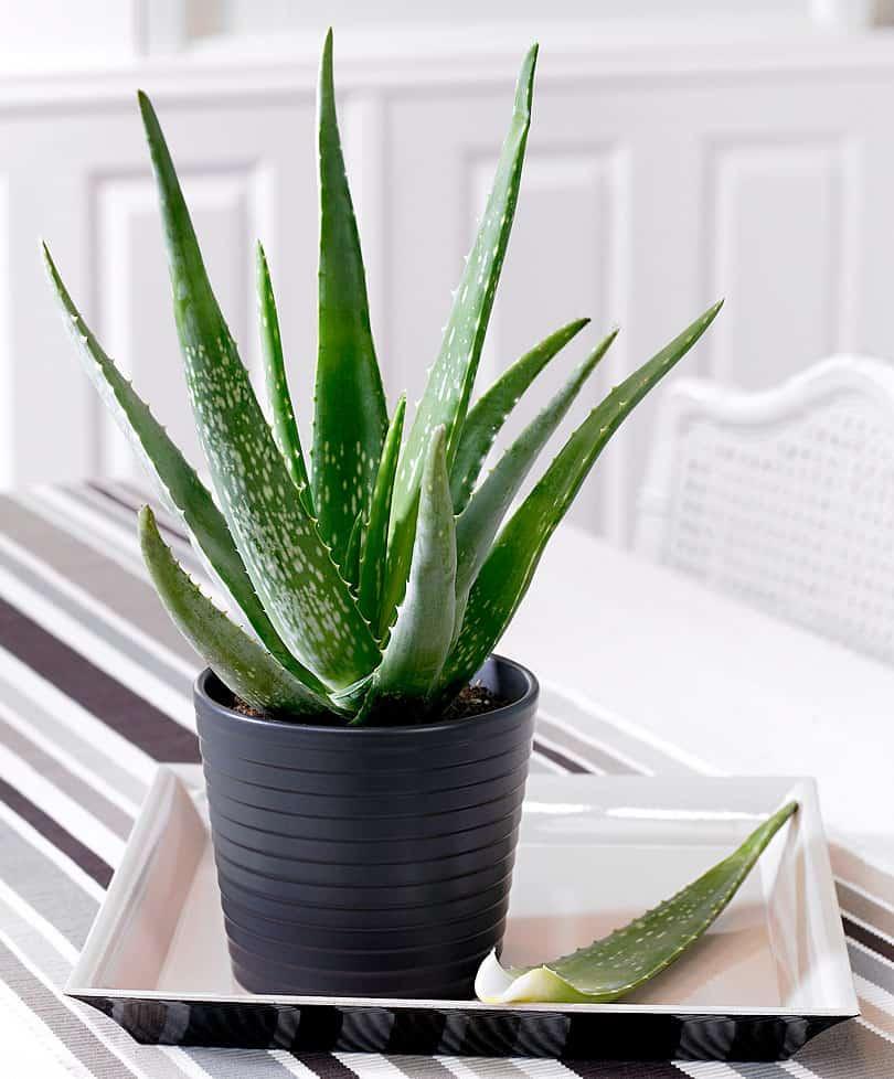 6 loại cây trồng trong bếp khử mùi cực sạch, hút tài lộc vào nhà-5