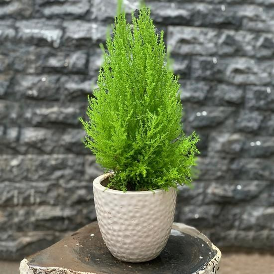 6 loại cây trồng trong bếp khử mùi cực sạch, hút tài lộc vào nhà-6