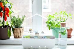 6 loại cây trồng trong bếp khử mùi 'cực sạch', hút tài lộc vào nhà