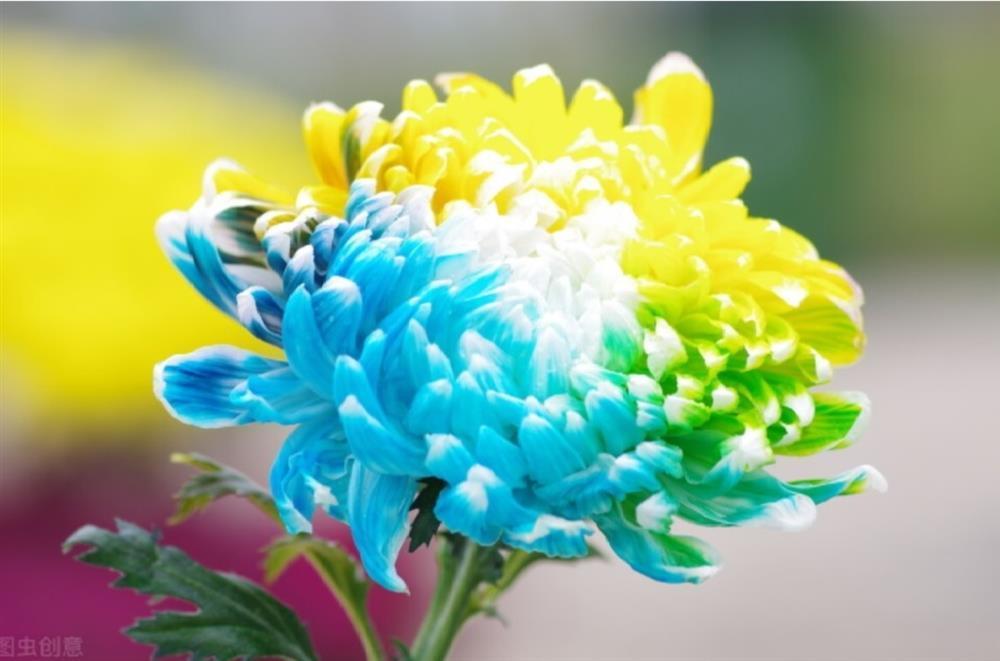 Chọn 1 bông hoa để biết trong cuộc đời này bạn biết ơn ai nhất-1