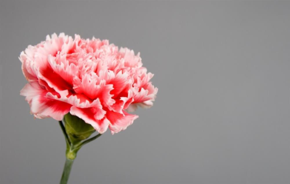 Chọn 1 bông hoa để biết trong cuộc đời này bạn biết ơn ai nhất-2