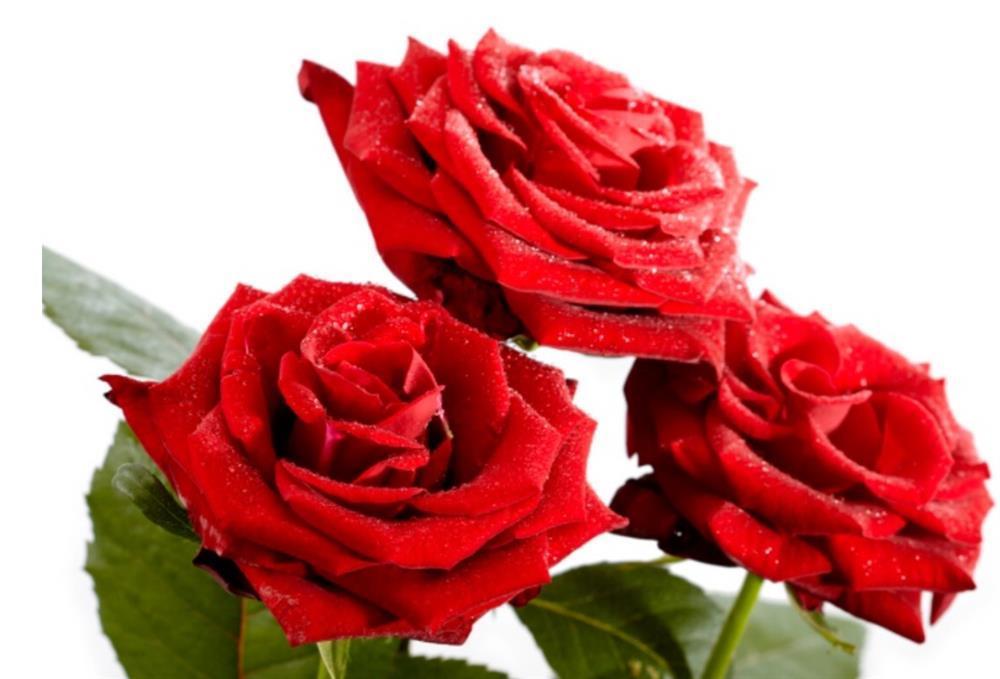 Chọn 1 bông hoa để biết trong cuộc đời này bạn biết ơn ai nhất-3