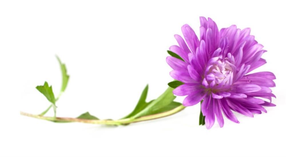 Chọn 1 bông hoa để biết trong cuộc đời này bạn biết ơn ai nhất-4