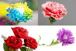 Chọn 1 bông hoa để biết trong cuộc đời này bạn biết ơn ai nhất