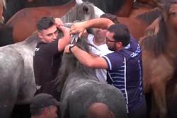 Lễ hội thuần hóa ngựa hoang của người Tây Ban Nha