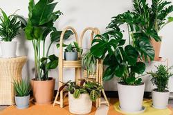 5 loại cây trồng xua đuổi vận đen, mời gọi Thần tài vào nhà
