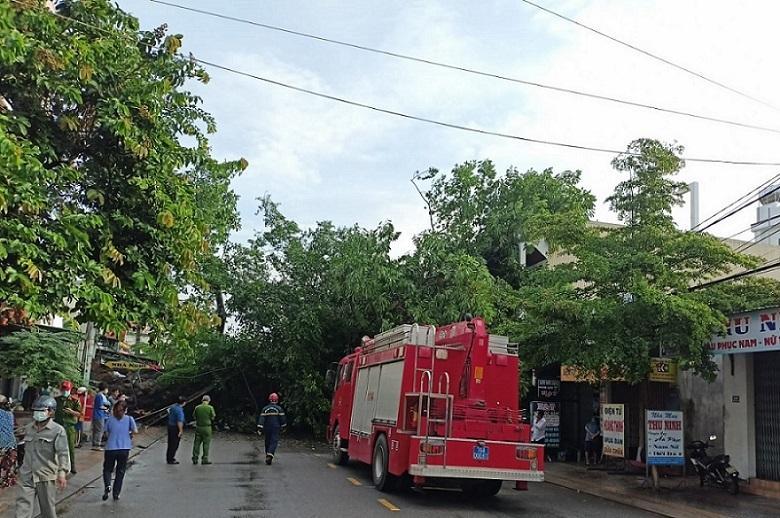 Cây đa 200 tuổi ở Quảng Ngãi bật gốc, đổ đè người đi đường tử vong-1
