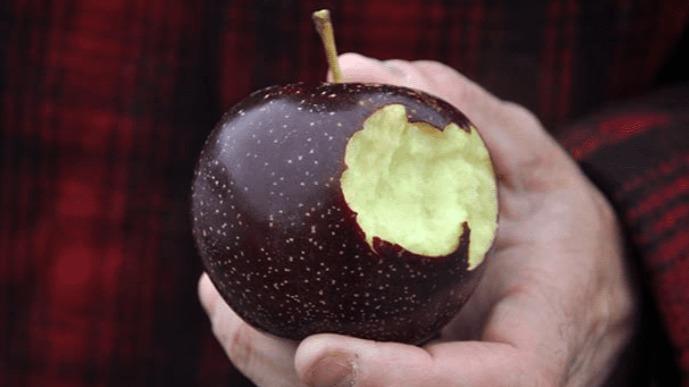 Tận mục giống táo ví như kim cương đen, nửa triệu đồng/quả-8