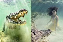 Bơi cùng cá sấu khổng lồ ở Mexico