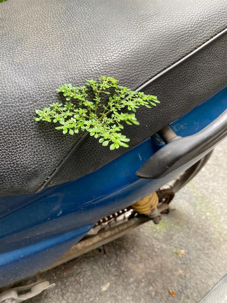 Xe máy nở hoa, ô tô chuột làm tổ sau 2 tháng nghỉ giãn cách-2