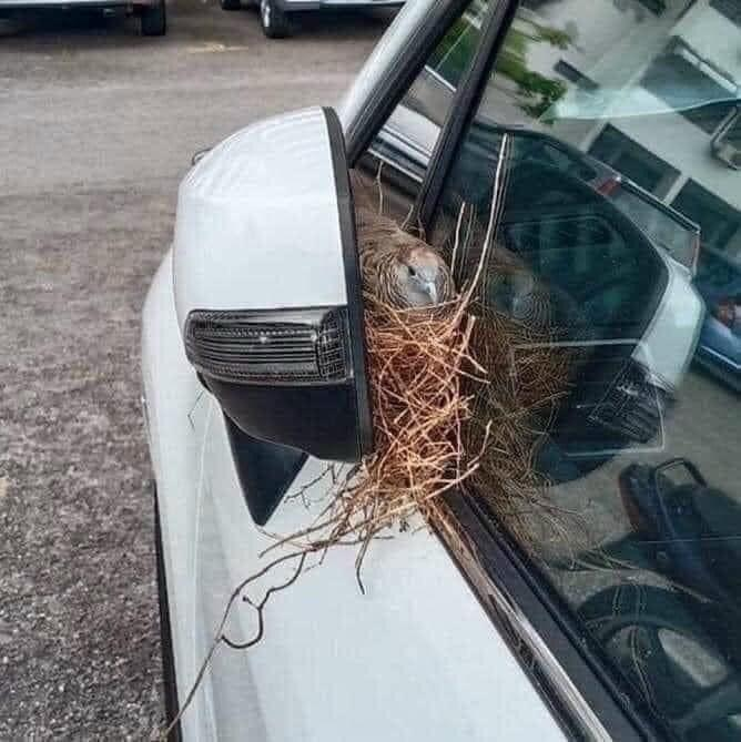 Xe máy nở hoa, ô tô chuột làm tổ sau 2 tháng nghỉ giãn cách-3