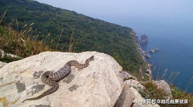 Rợn người hòn đảo gần 20.000 con rắn độc trong 1km2-3