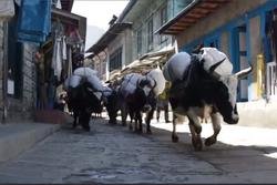 Nghề khuân vác đầy khắc nghiệt ở Nepal