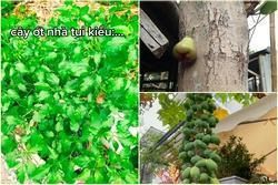 Cây ớt ra đúng 1 quả 'chỗ hiểm' và loạt cây thích mọc bừa phứa