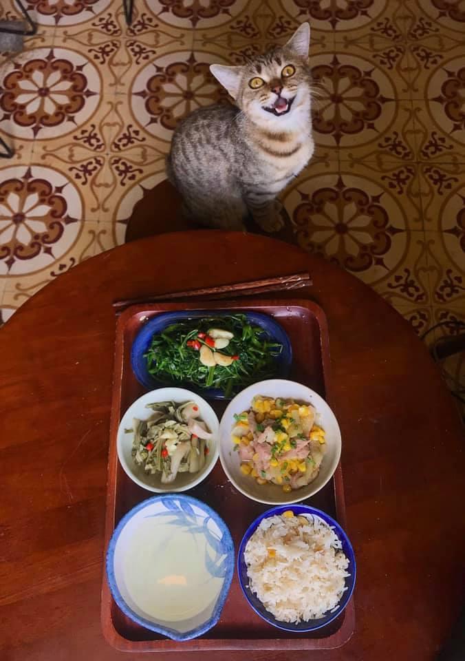 Cách ly cùng 1 chú mèo, 8x vẫn đam mê nấu toàn món ngon-5
