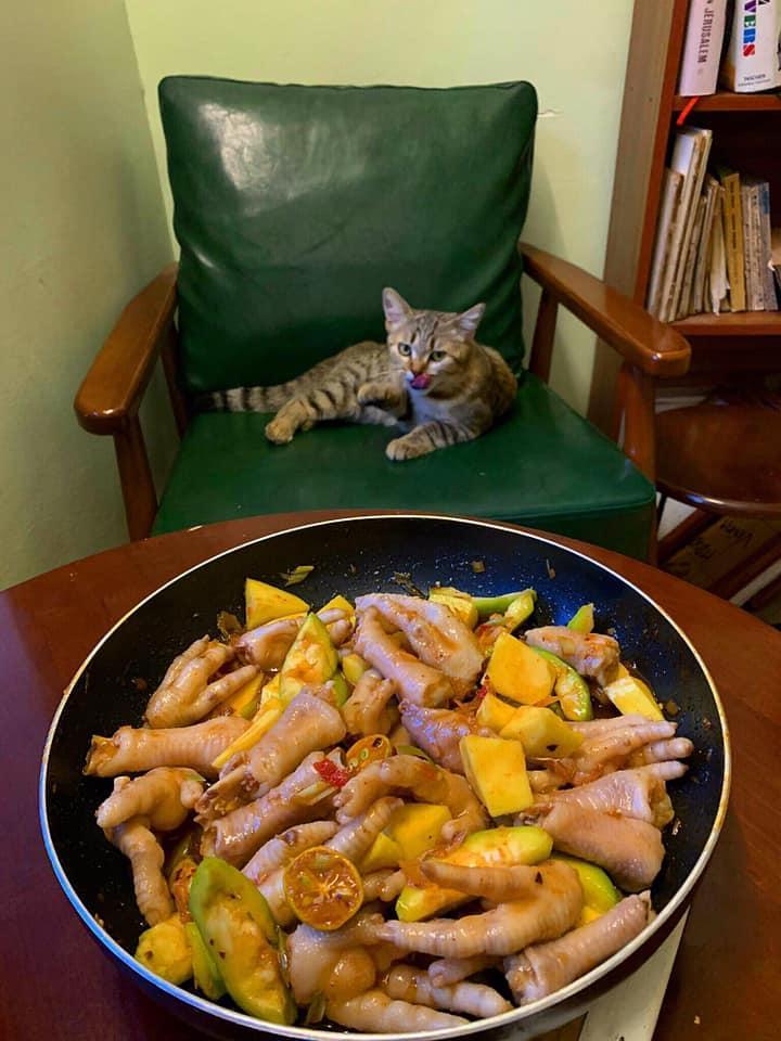 Cách ly cùng 1 chú mèo, 8x vẫn đam mê nấu toàn món ngon-12