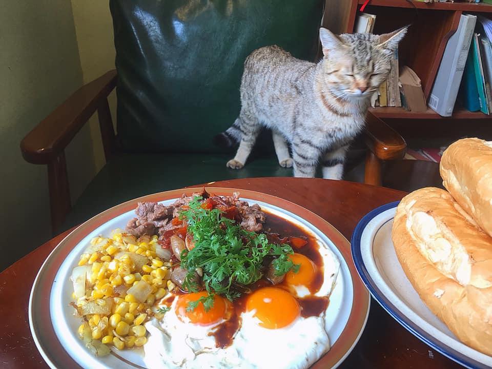 Cách ly cùng 1 chú mèo, 8x vẫn đam mê nấu toàn món ngon-13