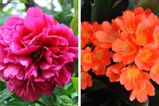 Top 5 loài hoa phong thủy mang đến phú quý, vinh hoa-1
