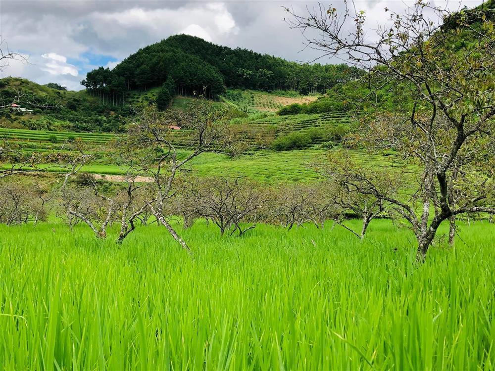 Mắc kẹt ở Mộc Châu, gia đình Hà Nội cuốc đất làm vườn, trèo đèo lội suối-4