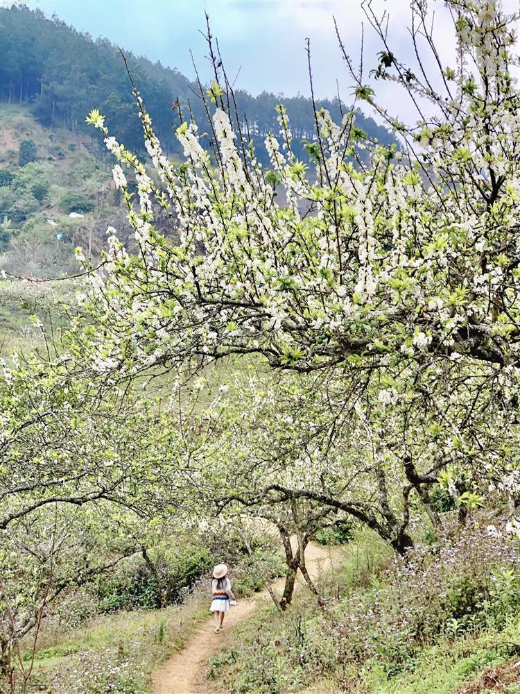 Mắc kẹt ở Mộc Châu, gia đình Hà Nội cuốc đất làm vườn, trèo đèo lội suối-5