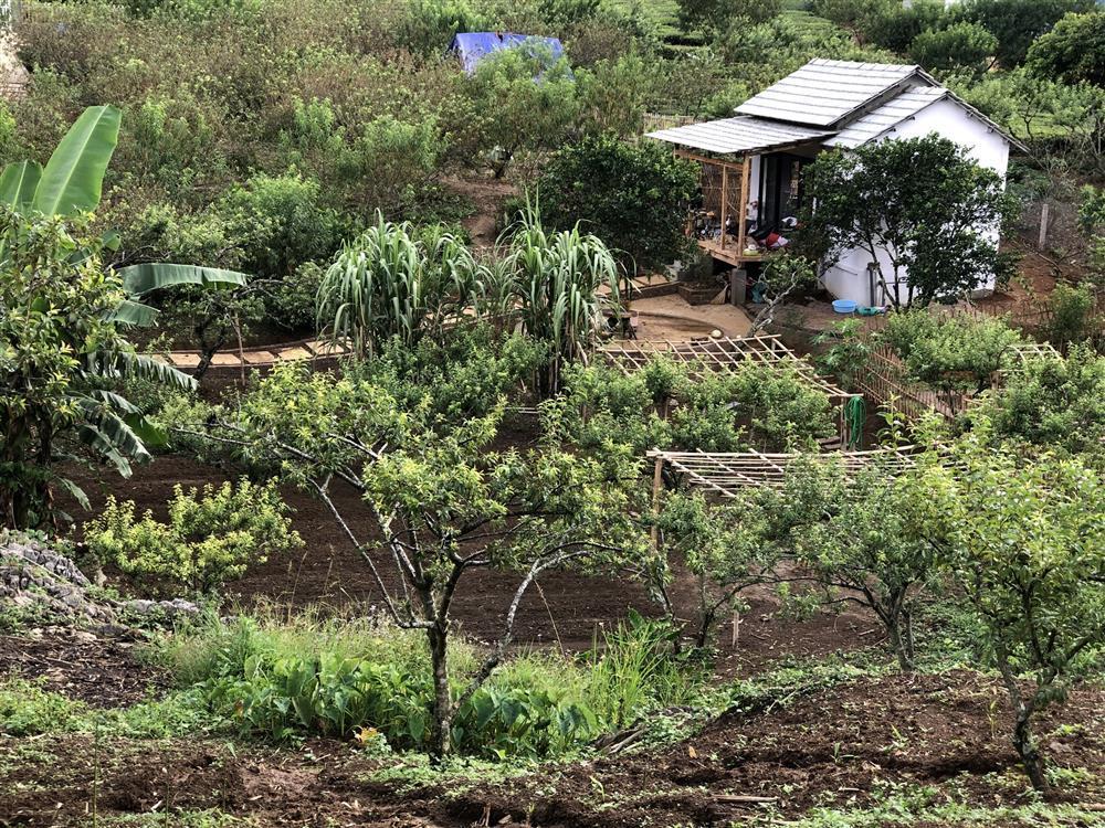 Mắc kẹt ở Mộc Châu, gia đình Hà Nội cuốc đất làm vườn, trèo đèo lội suối-7