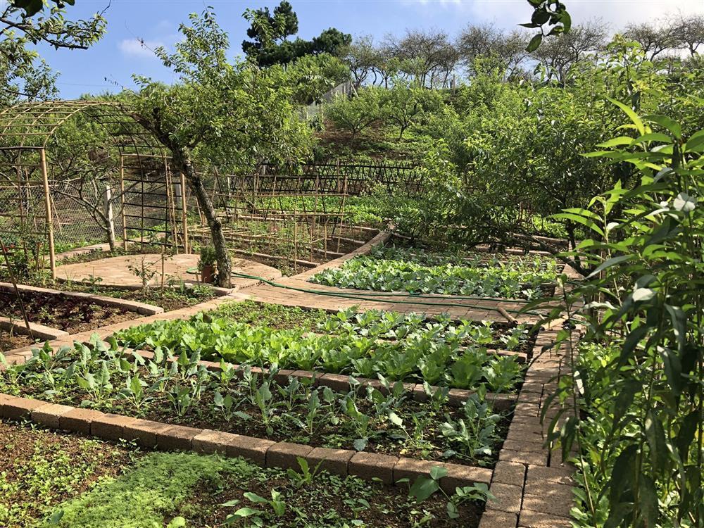 Mắc kẹt ở Mộc Châu, gia đình Hà Nội cuốc đất làm vườn, trèo đèo lội suối-8