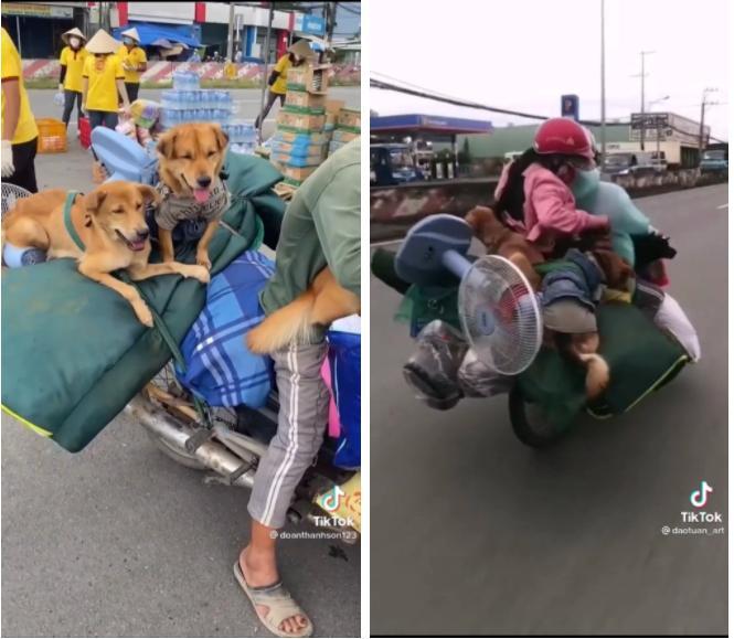 15 con chó bị tiêu hủy: Diễn biến bất ngờ từ 1 con sống sót-6