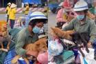 Tiêu hủy 15 con chó ở Cà Mau: 'Áp lực chống dịch, tiêu hủy công khai'