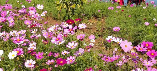 Đảo hoa Kon Trang Long Loi - Có nơi nào đẹp hơn?-2