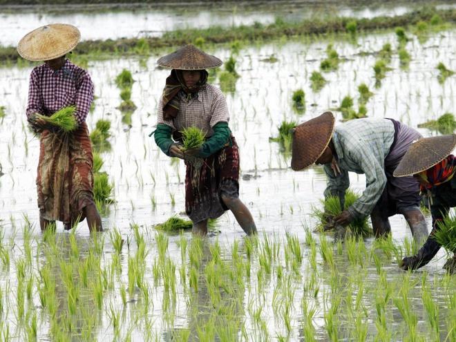 Biến đổi khí hậu ảnh hưởng đến thực phẩm như thế nào?-1