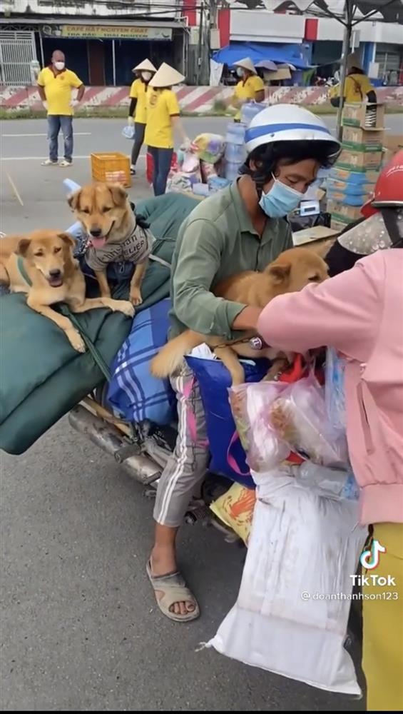 15 con chó bị tiêu hủy: Diễn biến bất ngờ từ 1 con sống sót-4