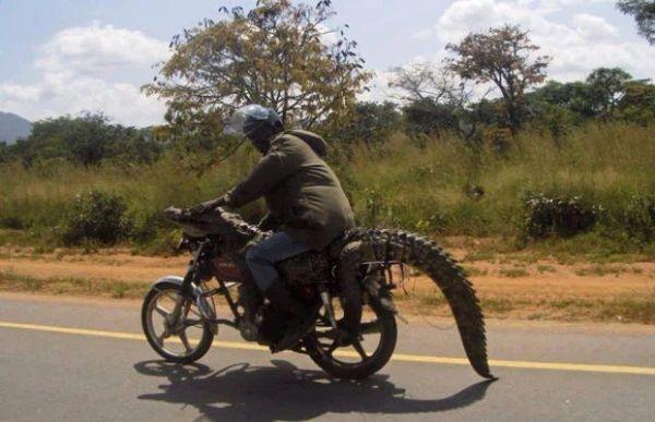 Những điều hiếm có khó tin ở Châu Phi khiến bạn phải há mồm-2