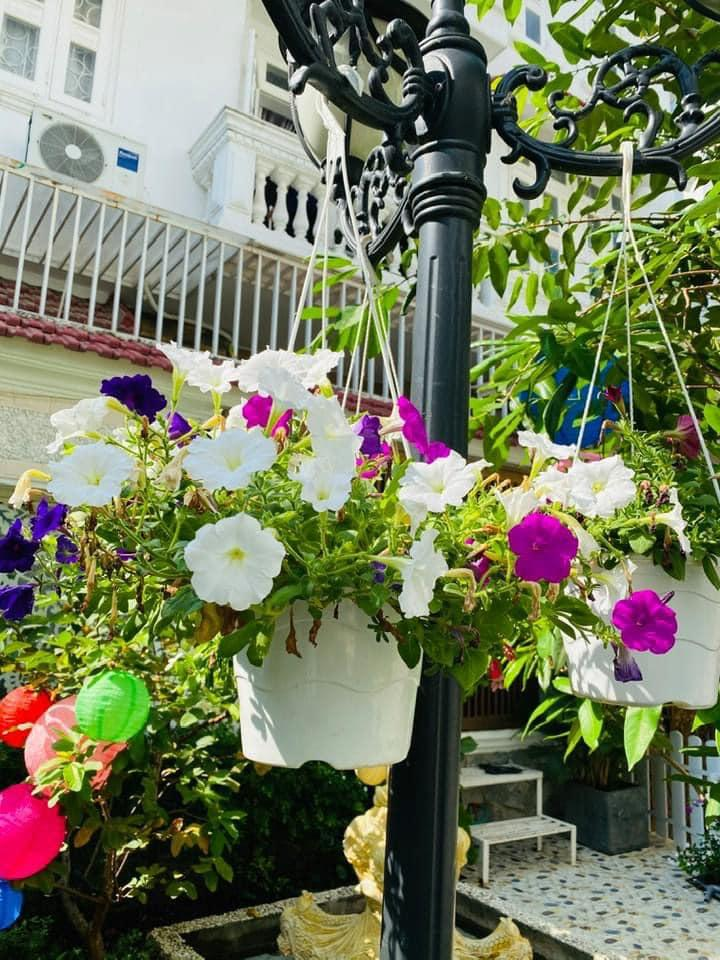 Vy Oanh khoe cận cảnh biệt thự ngập sắc hoa chồng tặng-16