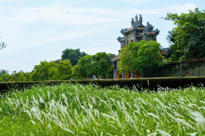 Thảm cỏ tranh đẹp ngẩn ngơ bên Hoàng thành Huế-3