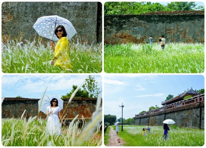 Thảm cỏ tranh đẹp ngẩn ngơ bên Hoàng thành Huế-5