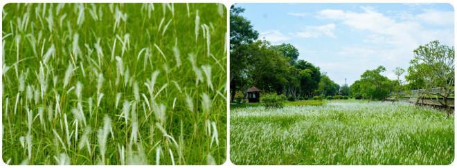 Thảm cỏ tranh đẹp ngẩn ngơ bên Hoàng thành Huế-6