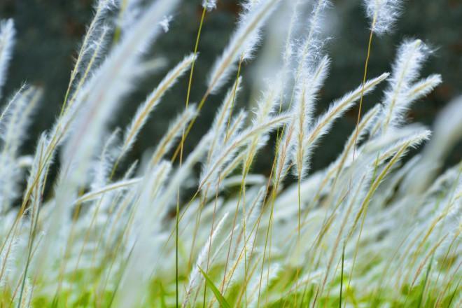 Thảm cỏ tranh đẹp ngẩn ngơ bên Hoàng thành Huế-7