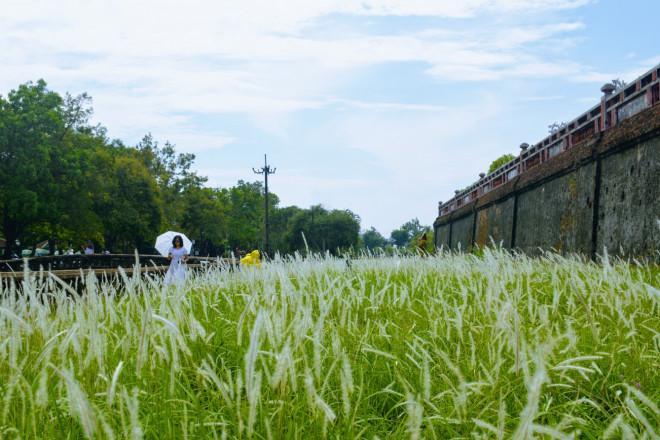 Thảm cỏ tranh đẹp ngẩn ngơ bên Hoàng thành Huế-8