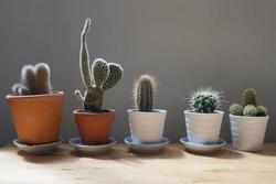 8 loại cây nên trồng ở ban công giúp gia chủ hút vận tài lộc